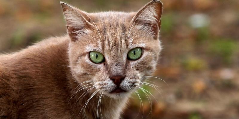 Katze - Foto: über dts Nachrichtenagentur