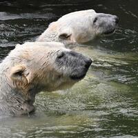 Treffen im Eisbär-Gehege - Foto: Paul Zinken