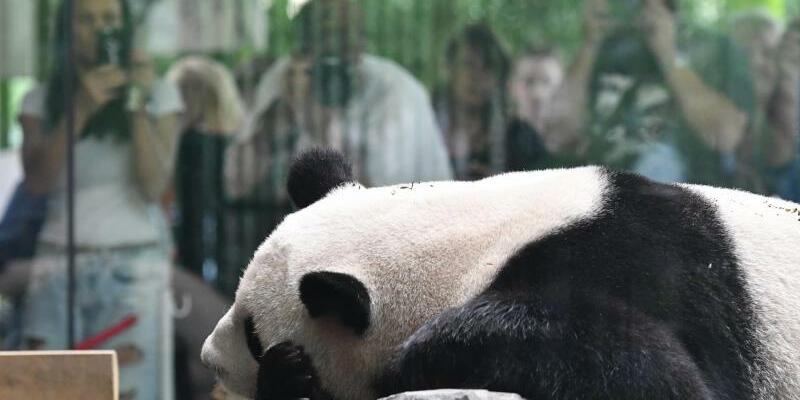 Jiao Qing - Foto: Paul Zinken