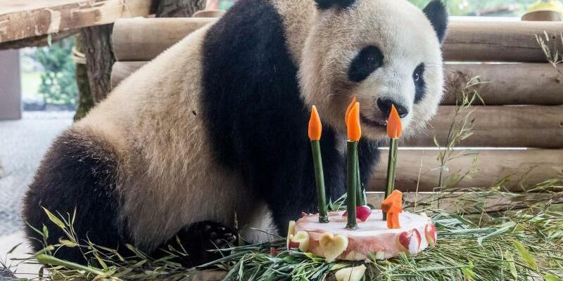 Panda-Geburtstag - Foto: Frederic Schweizer