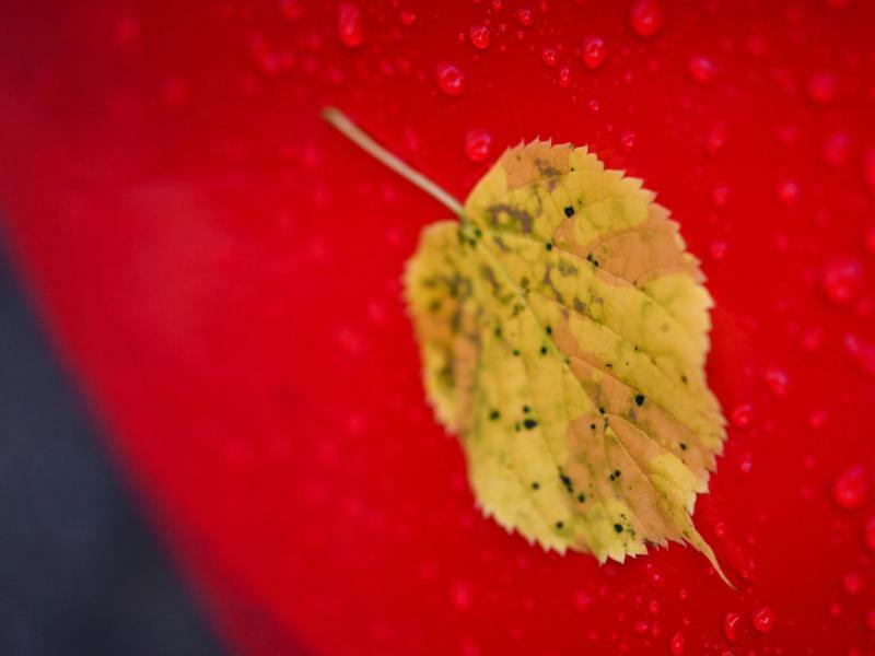 Herbstbote - Foto: Patrick Pleul
