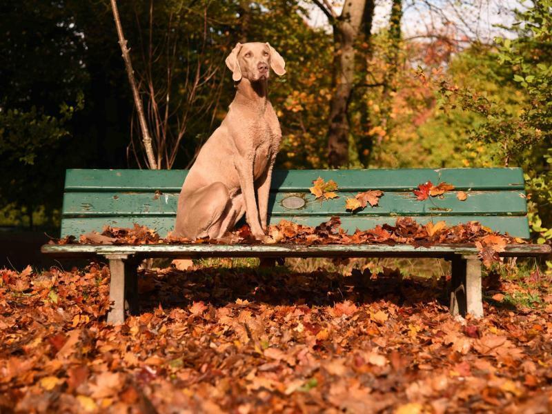 Hund im Herbst - Foto: Amelie Geiger