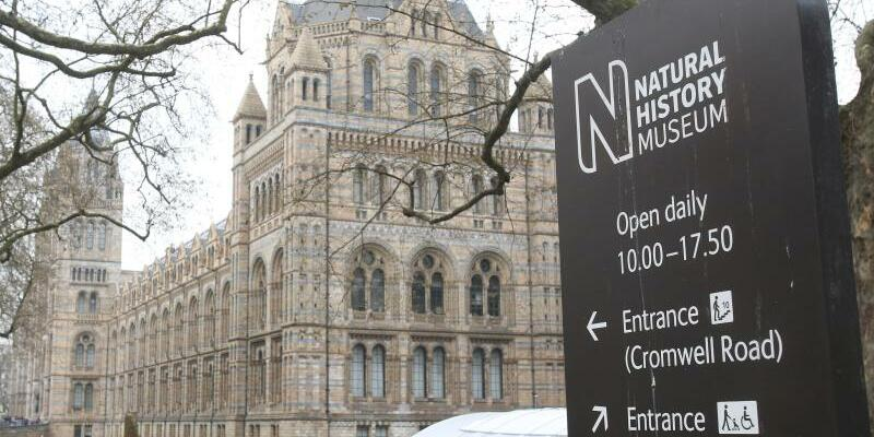 Natural History Museum in London - Foto: Camera 4/Archiv