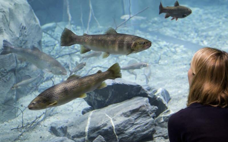 Neues Aquarium - Foto: Jean-Christophe Bott