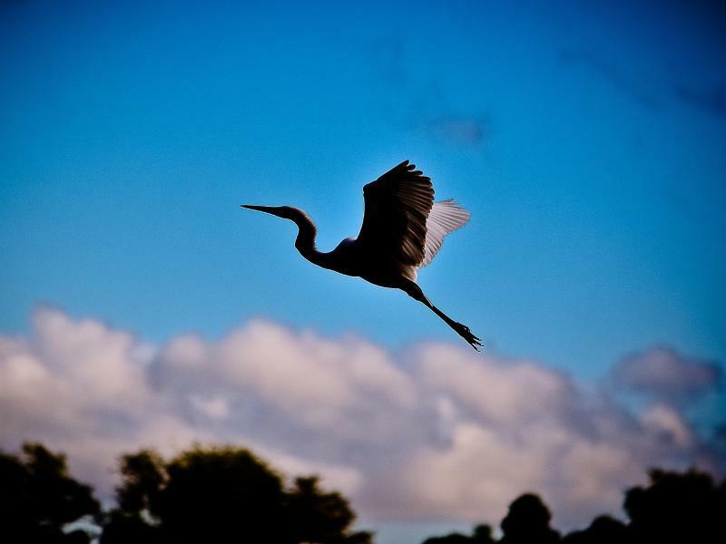 Formvollendeter Abflug - Foto: Omar Lopez