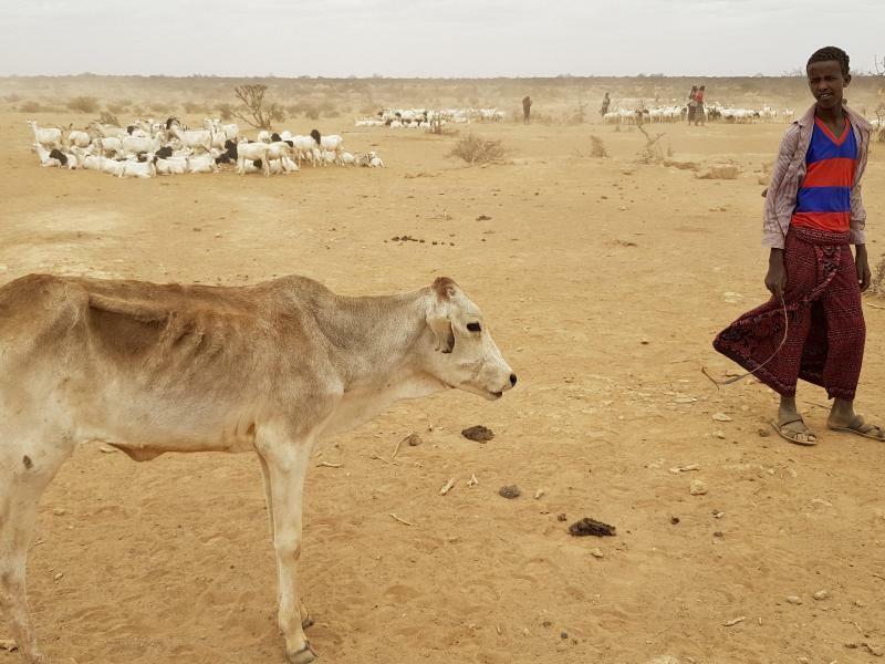 Dürre in Äthiopien - Foto: Elias Meseret