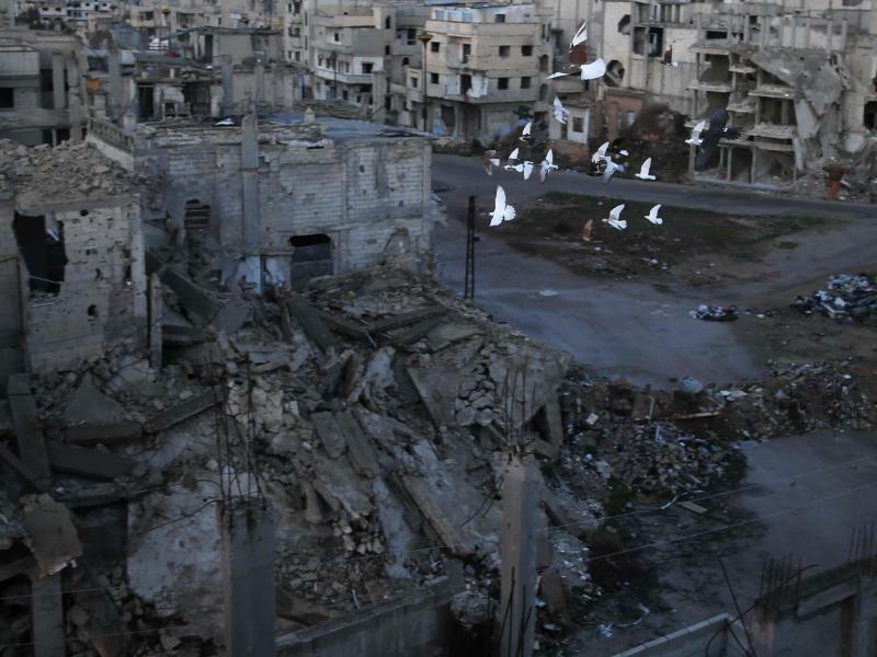 Tauben in Homs - Foto: Hassan Ammar