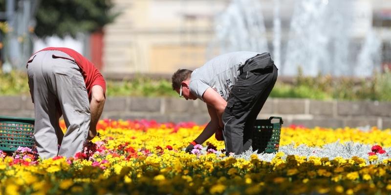Gartenarbeiter auf einem Blumenbeet - Foto: über dts Nachrichtenagentur