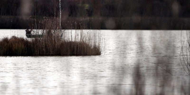 Heidesee in Halle - Foto: über dts Nachrichtenagentur