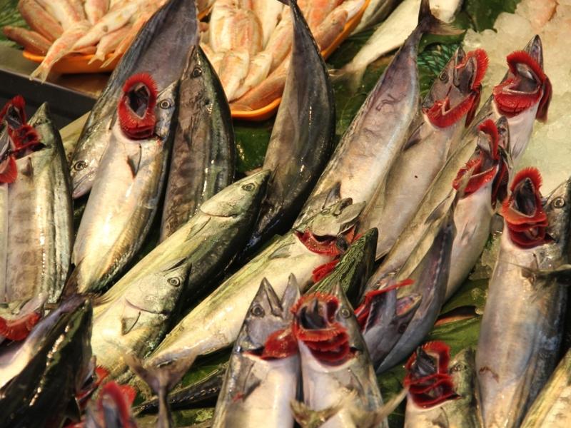 Fische - Foto: über dts Nachrichtenagentur