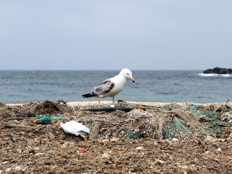 Möve auf einem Müllhaufen am Meer - Foto: über dts Nachrichtenagentur