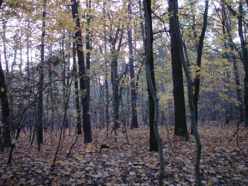 Wald - Foto: über dts Nachrichtenagentur
