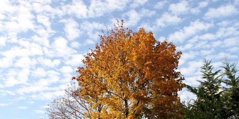 Herbstlicher Baum - Foto: über dts Nachrichtenagentur