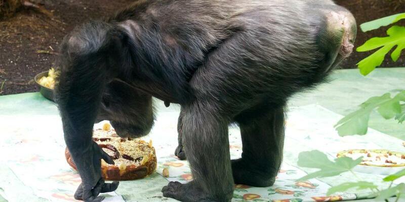 Schimpanse - Foto: Sven Hoppe