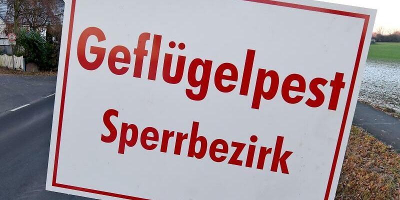 Vogelgrippe - Foto: Holger Hollemann