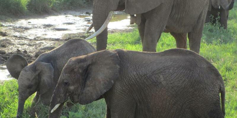 Elefanten - Foto: Eva-Maria Krafczyk