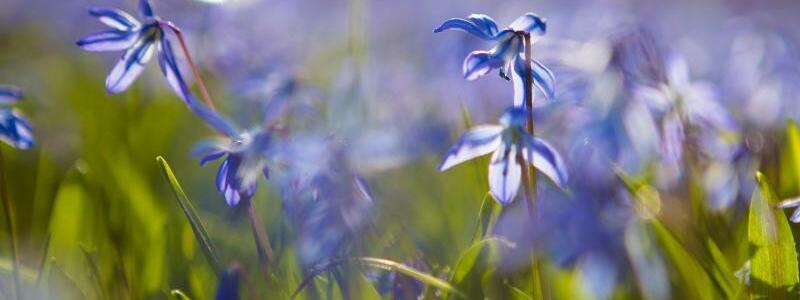 Frühling - Foto: Alexander Prautzsch