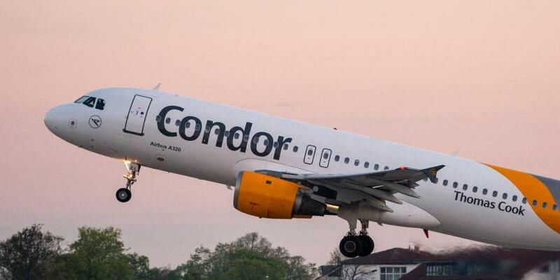Condor - Foto: Patrick Pleul