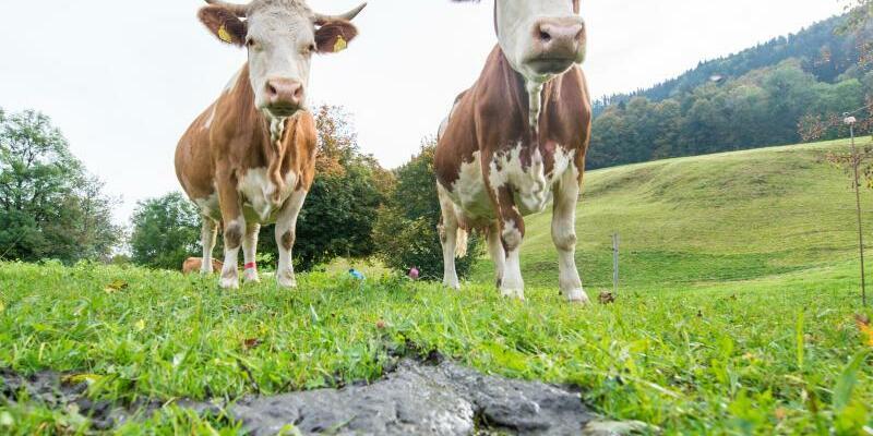 Kühe auf der Weide - Foto: Marc Müller/Illustration
