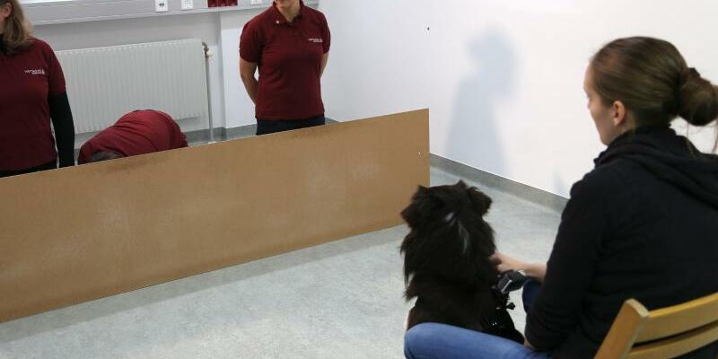 Test mit Hund - Foto: Ludwig Huber/Vetmeduni Vienna