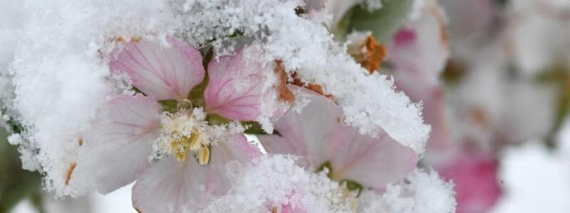 Kalte Schönheit - Foto: Felix Kästle
