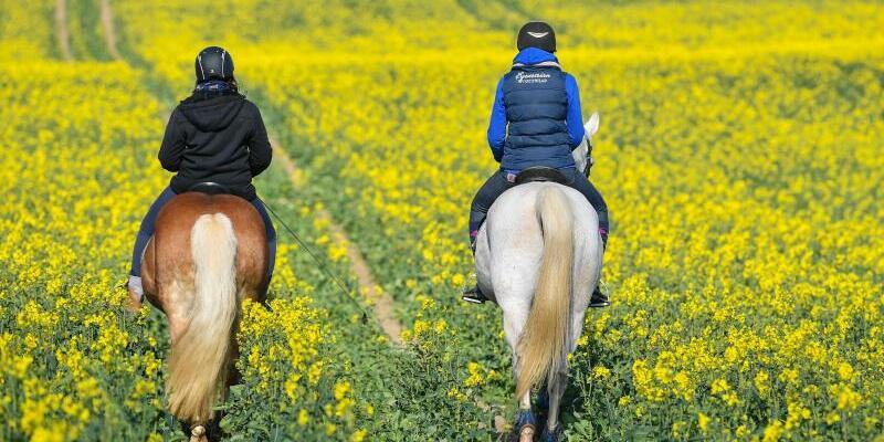 Ausritt in den Frühling - Foto: Patrick Pleul