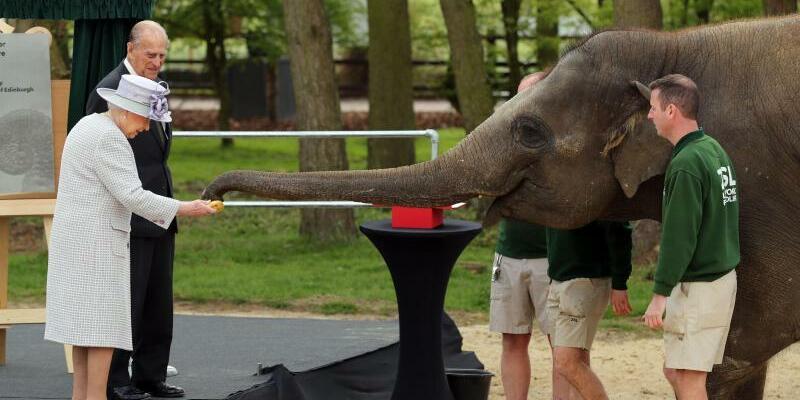 Elefantenfütterung - Foto: Chris Radburn