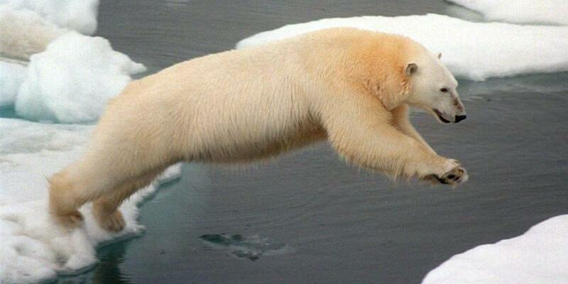 Eisbär - Foto: Greenpeace
