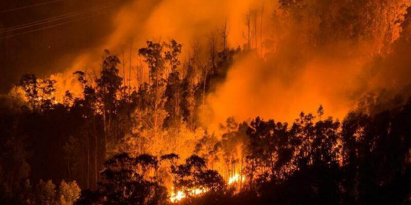 Waldbrände in Portugal - Foto: Es ist der Waldbrand mit den meisten Todesopfern in Portugal seit Beginn der Aufzeichnungen. Foto:Peter Kneffel