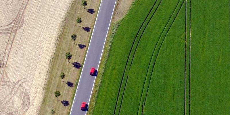 Am grünen Feld - Foto: Matthias Hiekel