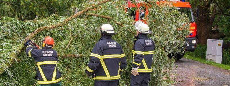 Unwetter in Hamburg - Foto: Feuerwehrleute zersägen in Hamburg-Ochsenwerder einen umgestürzten Baum. Foto:Daniel Bockwoldt