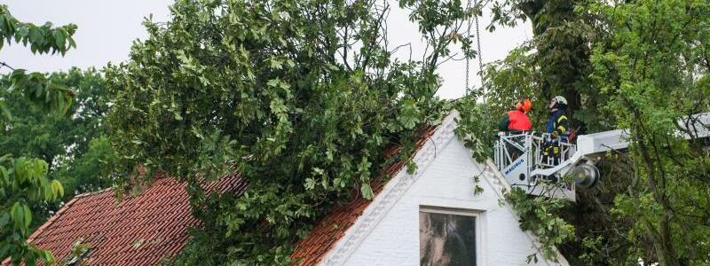 Umgestürzter Baum - Foto: Daniel Bockwoldt