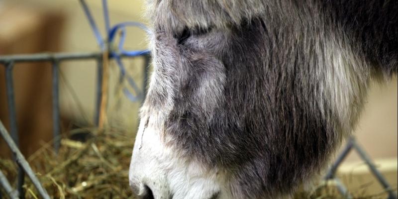 Esel - Foto: über dts Nachrichtenagentur