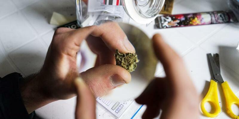 Marihuana in Uruguay - Foto: Matilde Campodonico