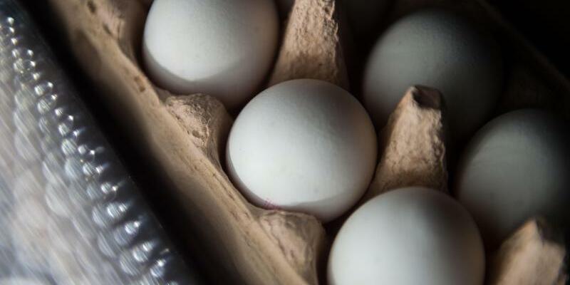 Skandal um belastete Eier - Foto: Lino Mirgeler