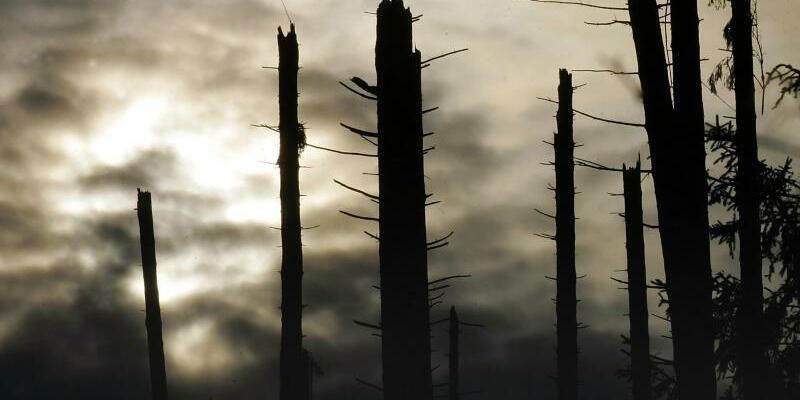 Orkan «Kyrill» - Foto: Bernd Thissen