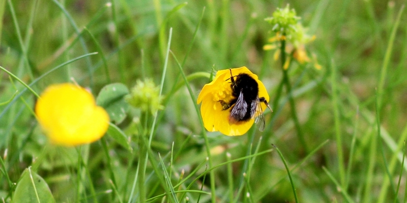 Hummel bestäubt Blüte - Foto: über dts Nachrichtenagentur