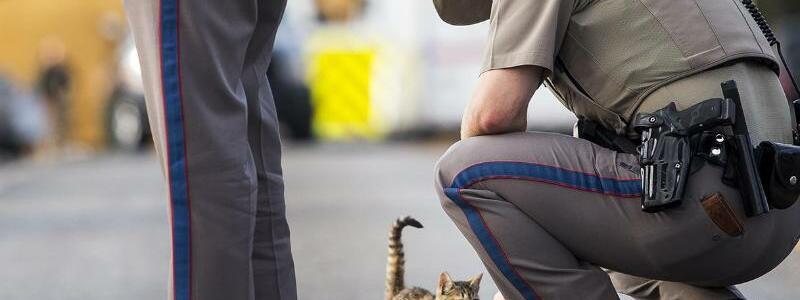 Sutherland Springs - Foto: Wenn man sonst nichts mehr tun kann:Ein Polizist kniet sich in Sutherland Springs in der Nähe des Tatorts des Kirchenmassakers zu einer kleinen Katze hinunter. Foto:Nick Wagner