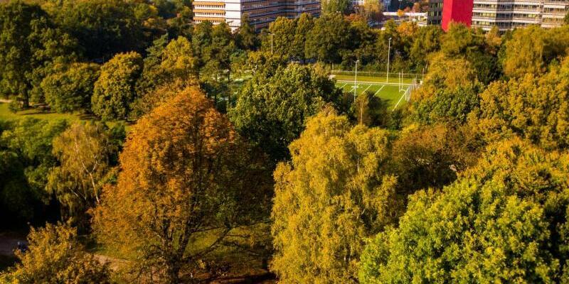 Bäume im Hamburger Stadtpark - Foto: Axel Heimken
