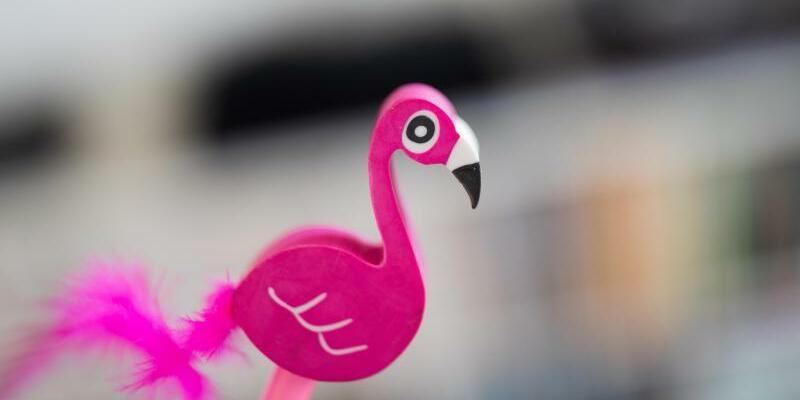 Flamingo - Foto: Rolf Vennenbernd