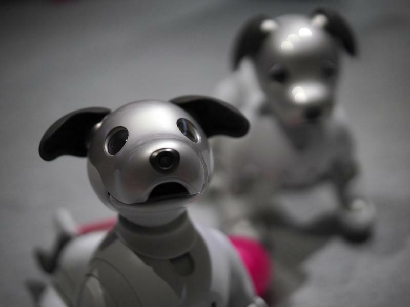 Roboter-Hunde - Foto: Eugene Hoshiko