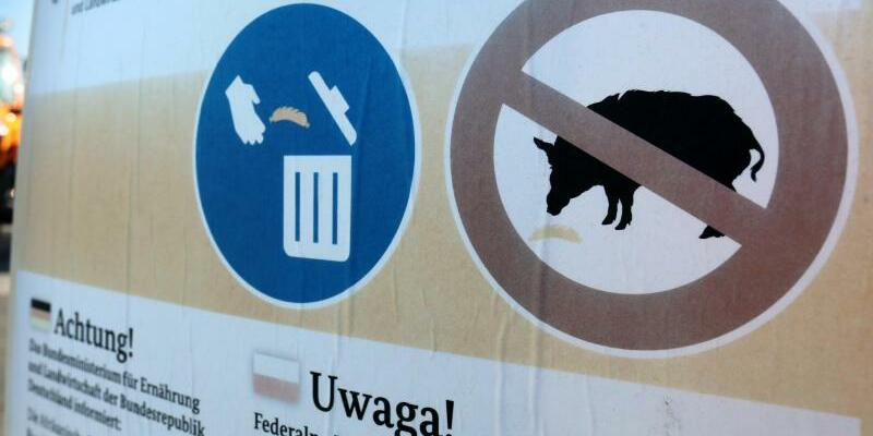 Kampf gegen Schweinepest - Foto: Bernd Wüstneck