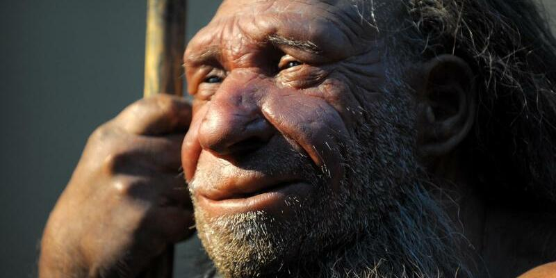 Neandertaler - Foto: Federico Gambarini