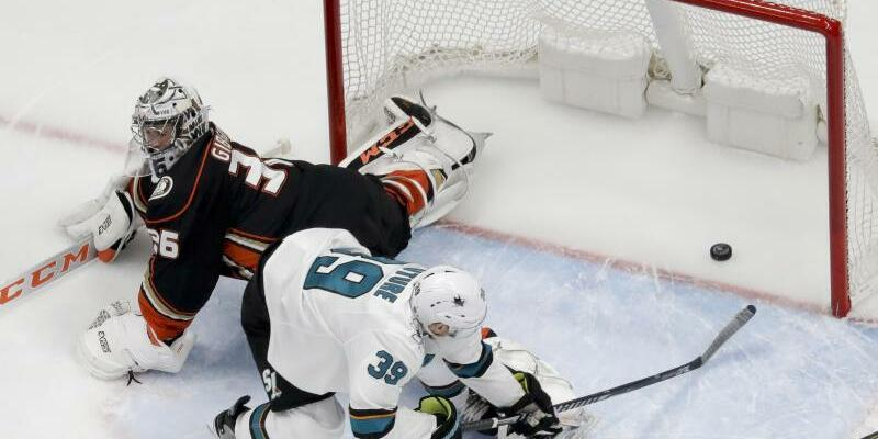 Anaheim Ducks - San José Sharks - Foto: Chris Carlson