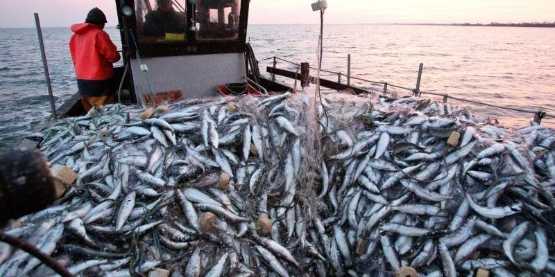Fischerei mit Stellnetzen - Foto: Christian Charisius