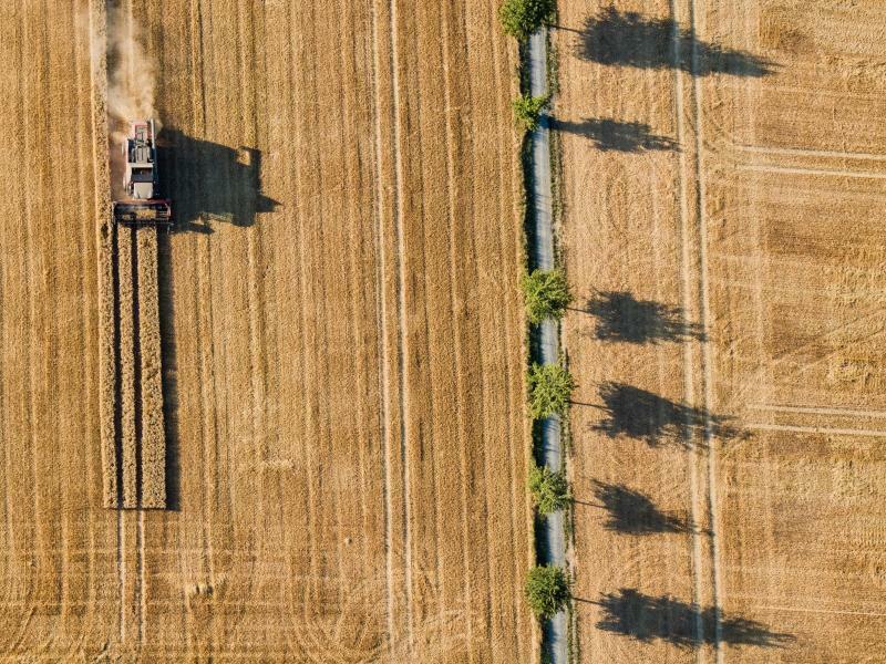 Ernte - Foto: Die lange Trockenheit dürfte bei der Ernte noch heftiger ins Kontor schlagen als gedacht. Statt zunächst geschätzter 41 Millionen Tonnen ist laut Bauernverband nur mit einer Menge von rund 36 Millionen Tonnen zu rechnen. Foto:Julian Stratenschulte