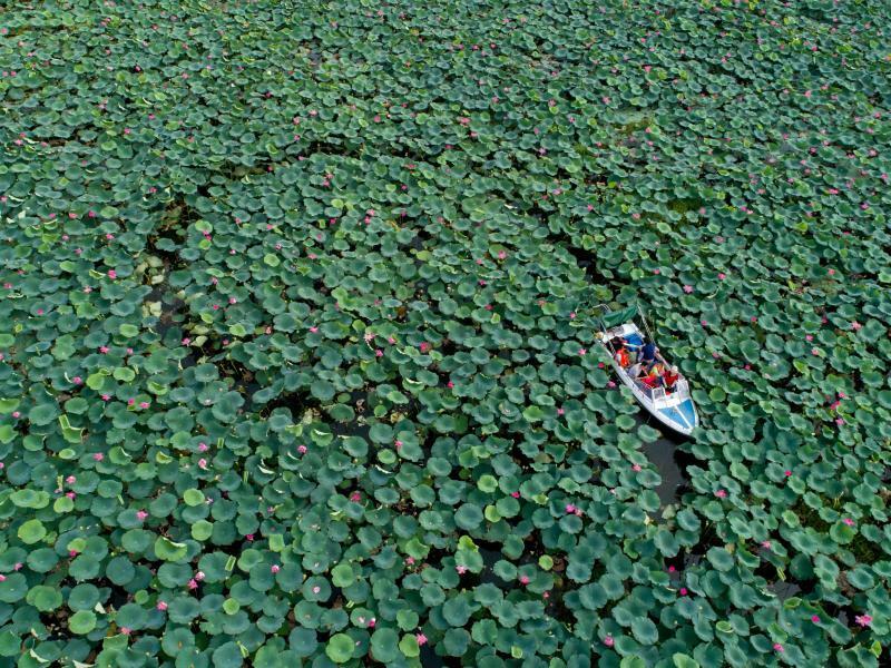Schwimmender Garten - Foto: Xiong Qi/XinHua