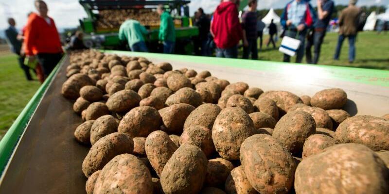 Kartoffeln - Foto: Ole Spata/Illustration