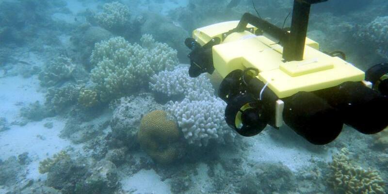 Roboter hilft im Kampf gegen Seesterne - Foto: Great Barrier Reef Foudnation