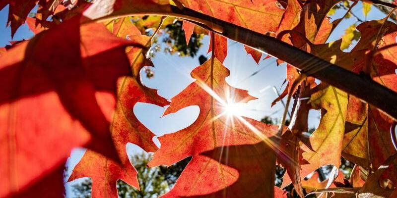 Herbstsonne - Foto: Frank Rumpenhorst